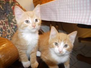 stow kent animal hospital portage animal clinic cat socialization blog